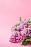 Розовая предпосылка с flovers сирени Поздравительная открытка, карточка приглашения Стоковое фото RF