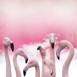 Розовая предпосылка фламинго Стоковые Фотографии RF
