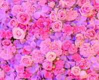 Розовая предпосылка цветка Стоковое Фото