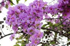 Розовая предпосылка 213 цветка Стоковая Фотография
