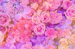 Розовая предпосылка цветка Стоковые Изображения RF
