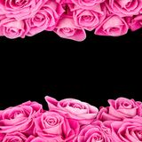 Розовая предпосылка стоковые изображения
