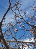 Розовая птица дерева стоковая фотография rf