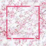 Розовая рамка на предпосылке природы весны с розовым белым цветением вишневых деревьев Природа весеннего времени стоковая фотография