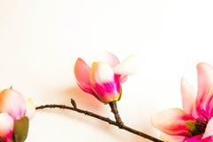Розовая рамка предпосылки цветка курорта Стоковая Фотография