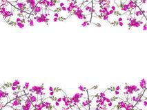 Розовая рамка цветка бугинвилии Стоковое Изображение RF
