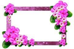 Розовая рамка цветка на белой предпосылке Стоковое Фото