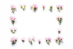 Розовая рамка цветков Стоковые Фотографии RF