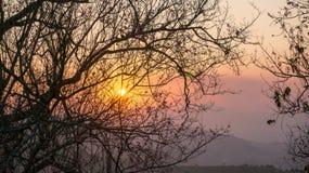 Розовая Сакура под заходом солнца, большое солнце Стоковая Фотография RF