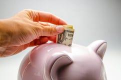 Розовая свинья - денежный ящик Давать банкноту к казначейству Серая предпосылка Финансы, сохраняя Стоковое Изображение
