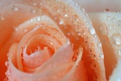 розовая серия стоковое фото rf