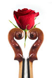 розовая скрипка Стоковые Фото