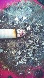 Розовая смерть Стоковая Фотография