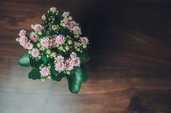 Розовая стойка цветка на коричневой доске стоковые изображения