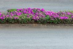 Розовая строка цветка бугинвилии Стоковые Фото
