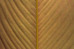Розовая текстура листовых золот Стоковая Фотография RF