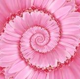 Розовая текстура предпосылки цветка спирали Droste Стоковые Фото