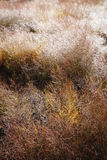 Розовая трава светя с падениями тумана Стоковые Фото