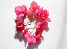 Розовая флористическая/сортированная розовая граница цветка на белой предпосылке стоковые фотографии rf