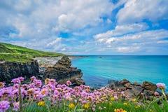 Розовая хозяйственность моря цветет на корнуольском побережье стоковое фото rf