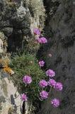 розовая хозяйственность моря стоковая фотография rf