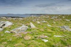 Розовая хозяйственность на скалистой поверхности стоковое фото rf