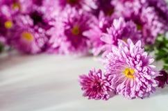 Розовая хризантема на белой предпосылке стоковая фотография