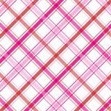 розовая шотландка Стоковое Фото