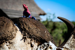 Розовая ящерица Стоковые Изображения RF