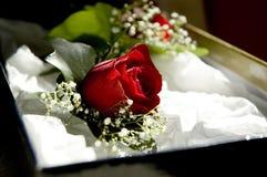 розовое венчание Стоковое Изображение