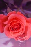розовое венчание Стоковое Фото