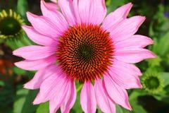 Розовое и оранжевое цветение с зелеными цветками на заднем плане Стоковые Изображения