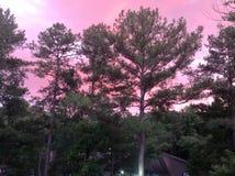 розовое небо Стоковые Изображения RF