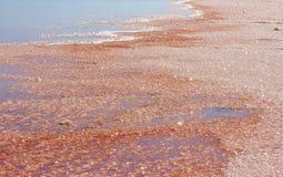 Розовое озеро сол в Намибии стоковая фотография