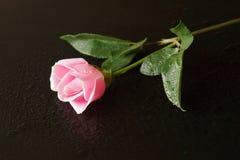 Розовое отражение Стоковое Изображение RF