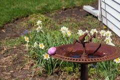 Розовое пасхальное яйцо спрятано на крае birdbath в цветочном саде стоковое фото