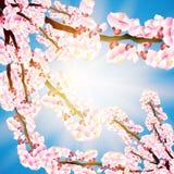 Розовое падение лепестков на прозрачную предпосылку Стоковое Фото