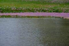 Розовое падение цветков в болото Стоковое фото RF