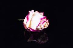 Розовое украшение на черной таблице стоковые фото