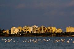 розовое урбанское Стоковые Изображения RF