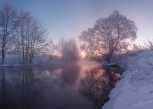 Розовое утро Стоковые Изображения