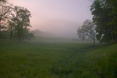 Розовое утро Стоковое Изображение RF