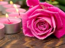 Розовое цветене Стоковая Фотография