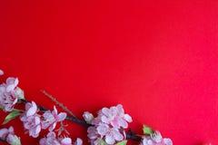 Розовое цветение сливы на красном цвете Стоковое Изображение RF
