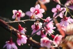 Розовое цветение цветка стоковые изображения rf