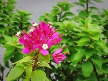 Розовое цветковое растение на зеленом цвете выходит предпосылка Стоковая Фотография RF