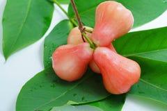 Розовое Яблоко Стоковая Фотография