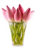 Розовое nucifera Nelumbo цветет в прозрачной вазе, конце вверх Стоковое Изображение RF