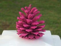Розовое Pinecone Стоковые Фото