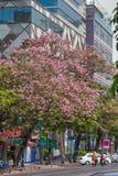 Розовое Tecoma Стоковое Изображение